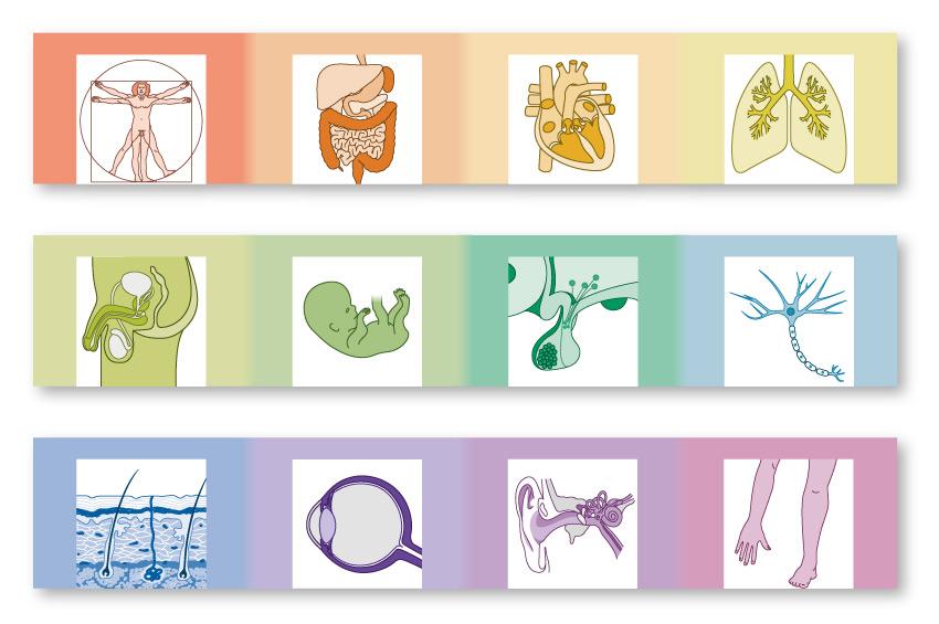 medizinische Illustration | Schattauer Verlag